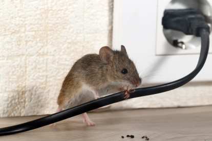 Pest Control in Kensal Green, NW10. Call Now! 020 8166 9746